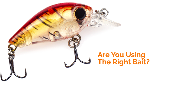 Are You Using The Right Bait?.